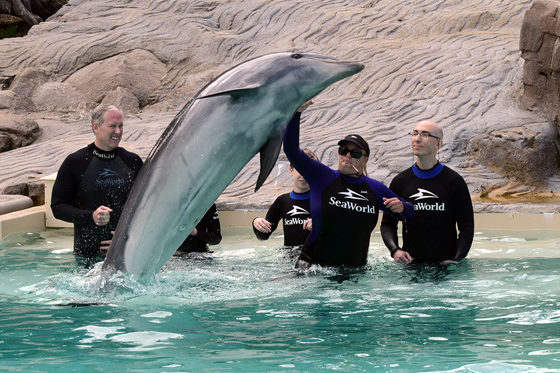 dolphinencounter06
