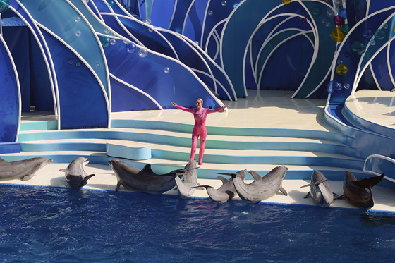 dolphinshow01