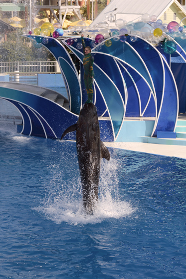 dolphinshow02