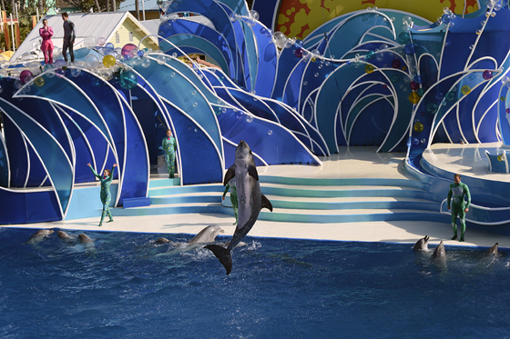 dolphinshow03