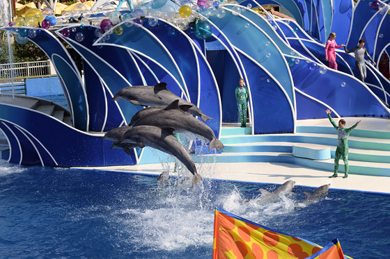 dolphinshow04