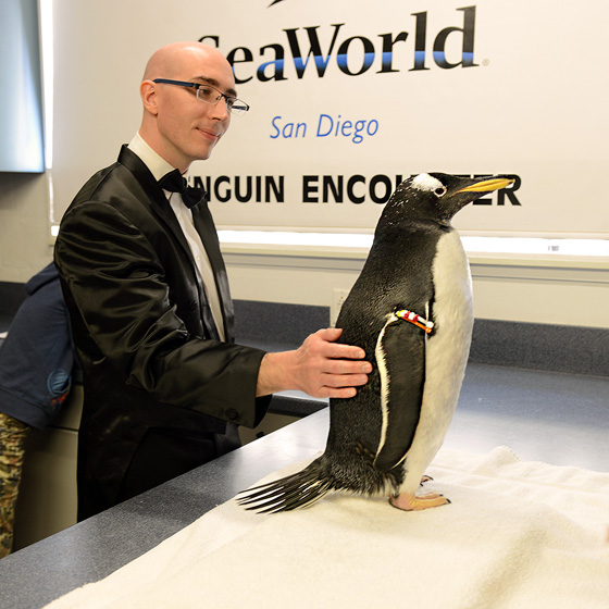 penguin_encounter03