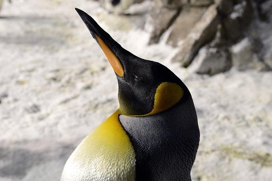 penguin_encounter04