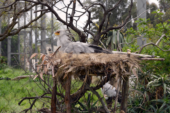 zoo_secretarybird